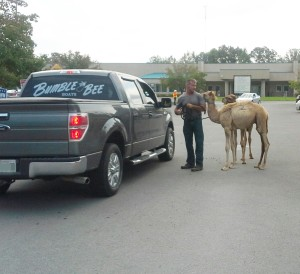 County Mayoral candidate Tim Brown got help from camels and donkeys as he was asking for votes on Saturday.