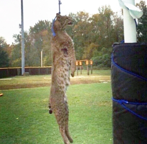 This is an actual photo taken before the Bobcat was taken down.