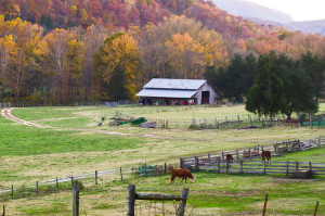 Time is running out for Tennessee farmers and ranchers to voice their concerns on how the Conservation Stewardship Program is set to operate for the next five years. Photo credit: Noel Pennington/Flickr.