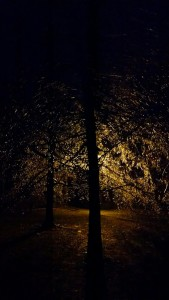 Ice glistening on a tree Monday night in Manchester... Photo by Rob Clutter