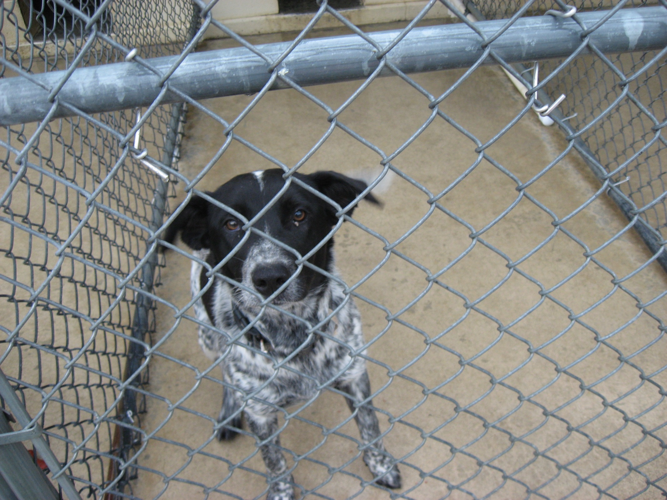 Dogs Are Available For Adoption At The Coffee County