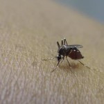 The first case of Zika virus is confirmed in Tennessee by the State Department of Health. (dodgertonskillhause/morguefile.com)