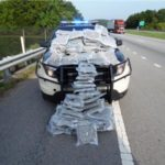 Pot bust in Marion County... Photo courtesy of THP