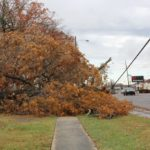 Tree downs power line in Tullahoma... Photos by Barry West