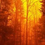 The night sky was bright orange last Monday night as wildfires engulfed parts of Gatlinburg, Tenn., displacing thousands and destroying dozens of homes and businesses. (National Park Service)