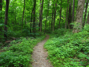 Tennessee Wilderness Act moving forward in the U.S. Senate