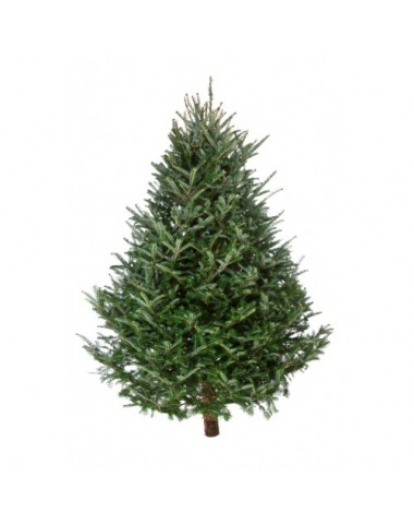 A Tennessee Region Has Not Been Immune To The Effects Of Nationwide Christmas Tree Shortage Which Is Driving Up Costs And Potentially Endangering Future