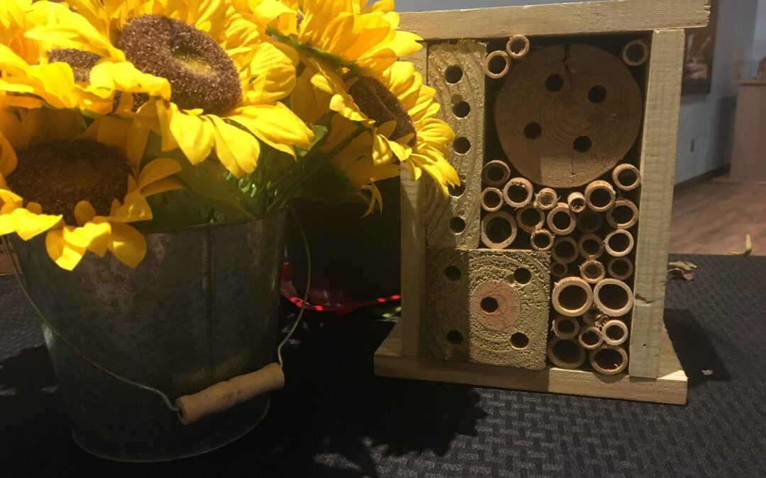 FEATURE FRIDAY: Helping the local honey bee population is easy